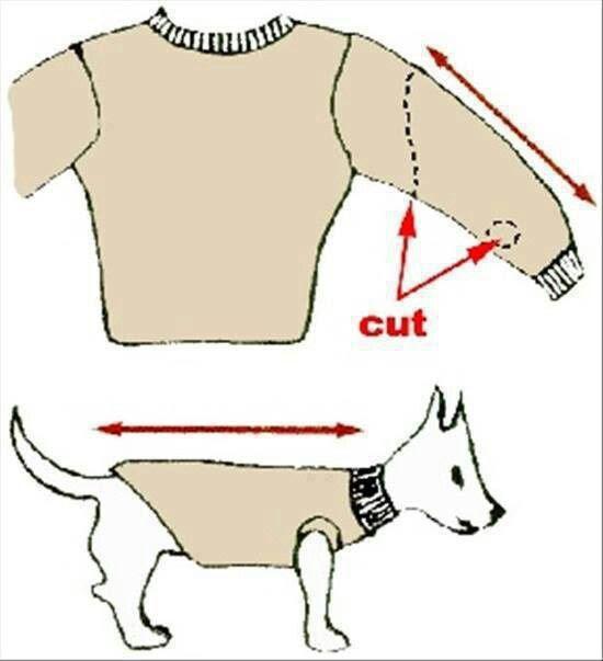 Dog sweater!