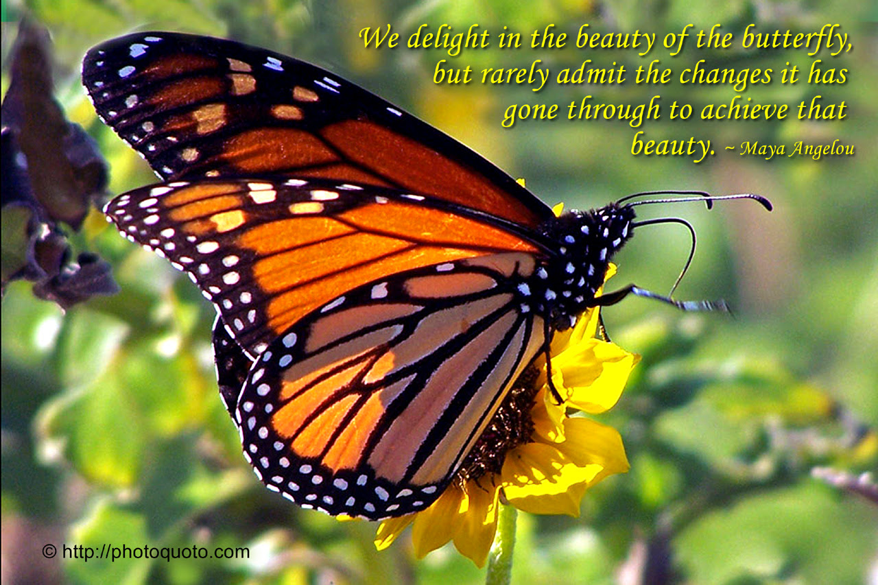 Monarch Butterfly Photo Quoto