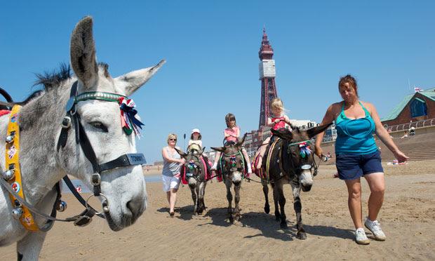 Blackpool donkey 011