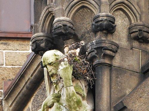 Two Nestlings
