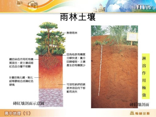 磚紅壤剖面示意圖 磚紅壤剖面 淋 溶 作 用 極 強 雨林土壤