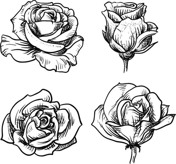 Imagenes De Dibujos De Rosas Imagenes