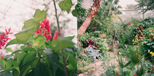 2011_1015_UFButterflies04.jpg