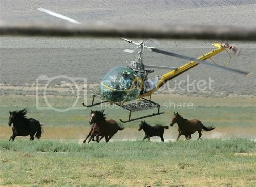 $37 Million To Pen Up Excess Wild Horses