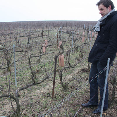 Emmanuel Brochet in Le Mont Benoit vineyard
