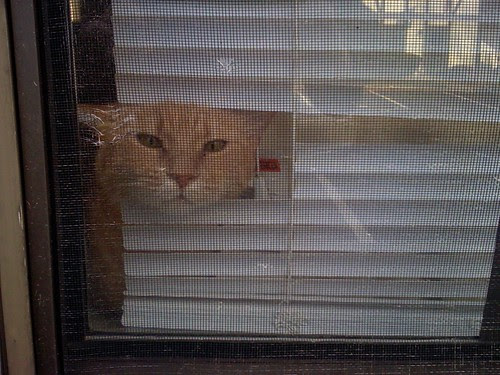 kitty window