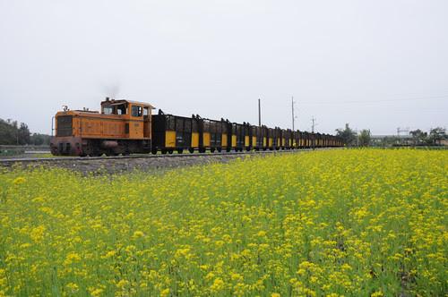 油菜花和火車