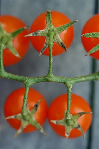 tomato sungold back