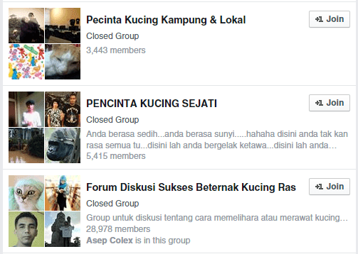 Grup kucing