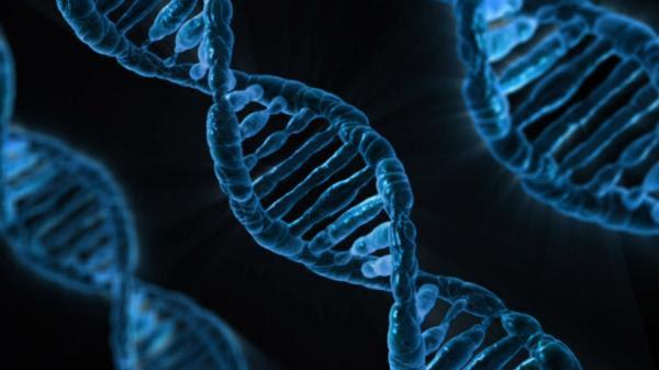 estudio vincula gene