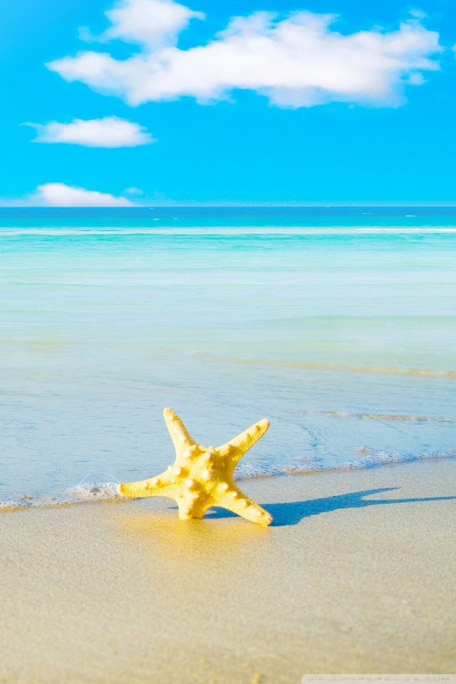 Starfish On The Beach 4k Hd Desktop Wallpaper For 4k Ultra Hd Tv