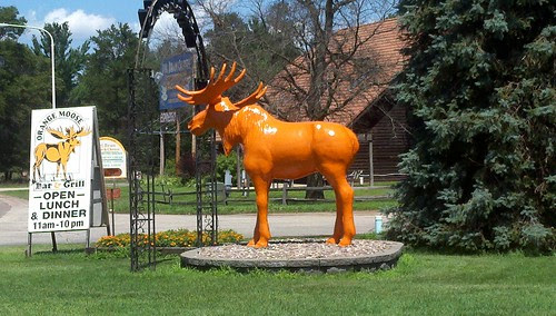 Orange moose in black river falls, wi