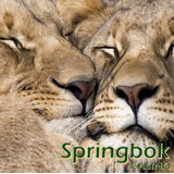 South Africas Springbok Casino Celebrating Valentines with Free Spins the Day Before