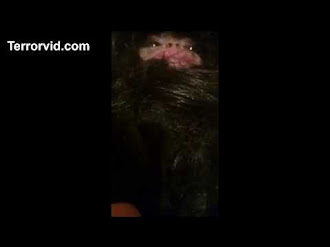 Mysterious Creature Found in Azerbaijan / Misteriosa Criatura en Azerbaiyán