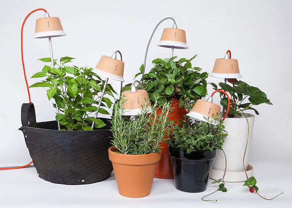 Bulbo  Grow Vegetables Indoors with LED Lights