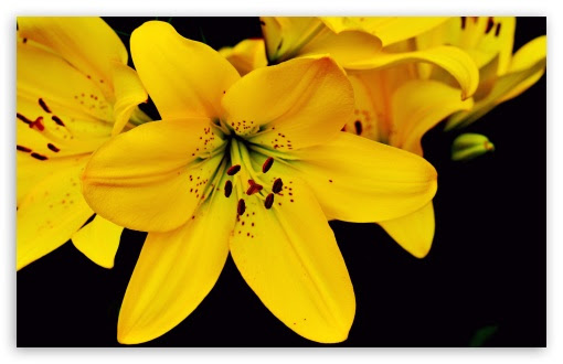 trends for yellow aesthetic flower desktop wallpaper pictures trends for yellow aesthetic flower