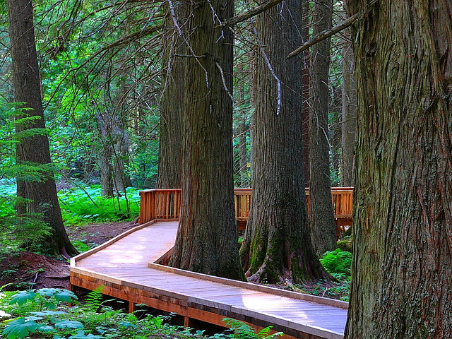 IMG_2545 Trail of the Cedars, Glacier National Park