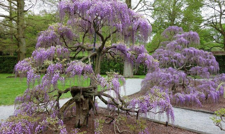 10 flores comuns que são venenosas