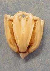 http://biomesblog.typepad.com/photos/uncategorized/aristotleslantern_1.jpg
