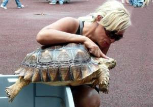 Turtle lover and African sulcata (spur-thigh) tortoise.