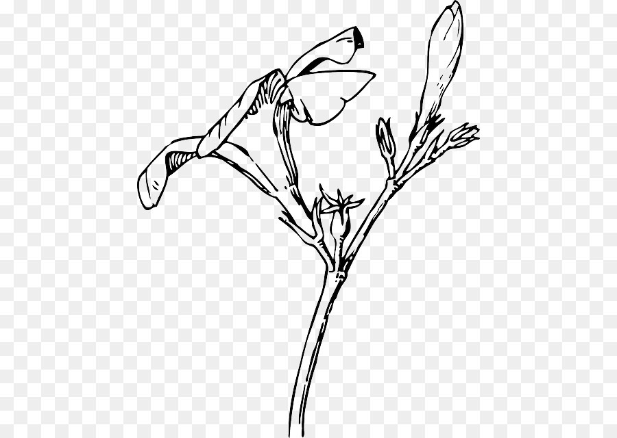Free Flower Drawing Transparent Background Download Free Clip Art Free Clip Art On Clipart Library