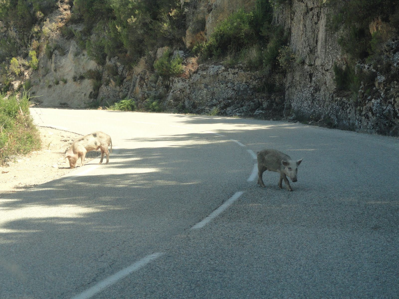 Image result for corsican roads