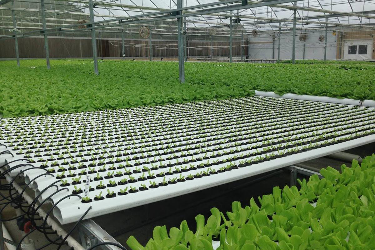 nft hydroponic system ~ Aquaponics