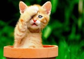 Gambar Kucing Oren Lucu