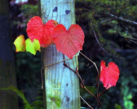 hearts   nature xcitefunnet