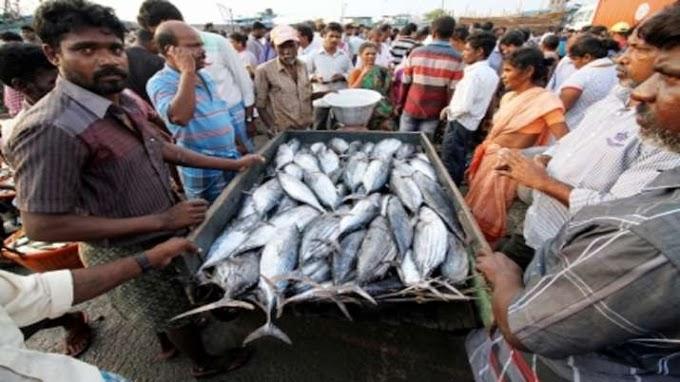 उत्तर प्रदेश में अब नीली क्रांति को बढ़ावा, जानिए कैसे हो सकता है मछली कारोबार से फायदा
