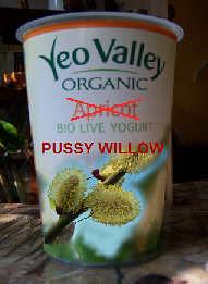 pussy willow yoghurt