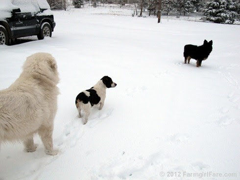 Snow dogs 10 - FarmgirlFare.com