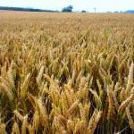 परमात्मा और किसान  Motivational Hindi Story