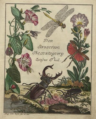 Insecten-Belustigung V.2 frontispiece