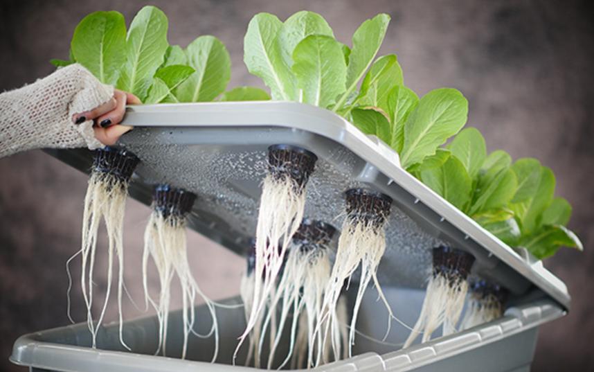 noncirculating_hydroponics