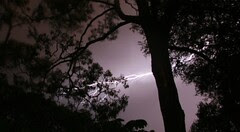 Lightning in the gum trees