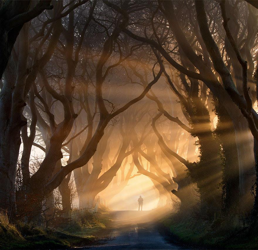 amazing-trees-6-1