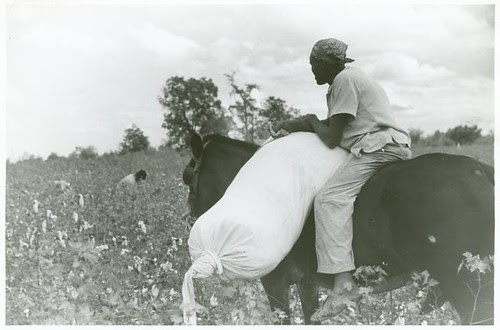 [African American cotton plantation worker, hired as a day l...
