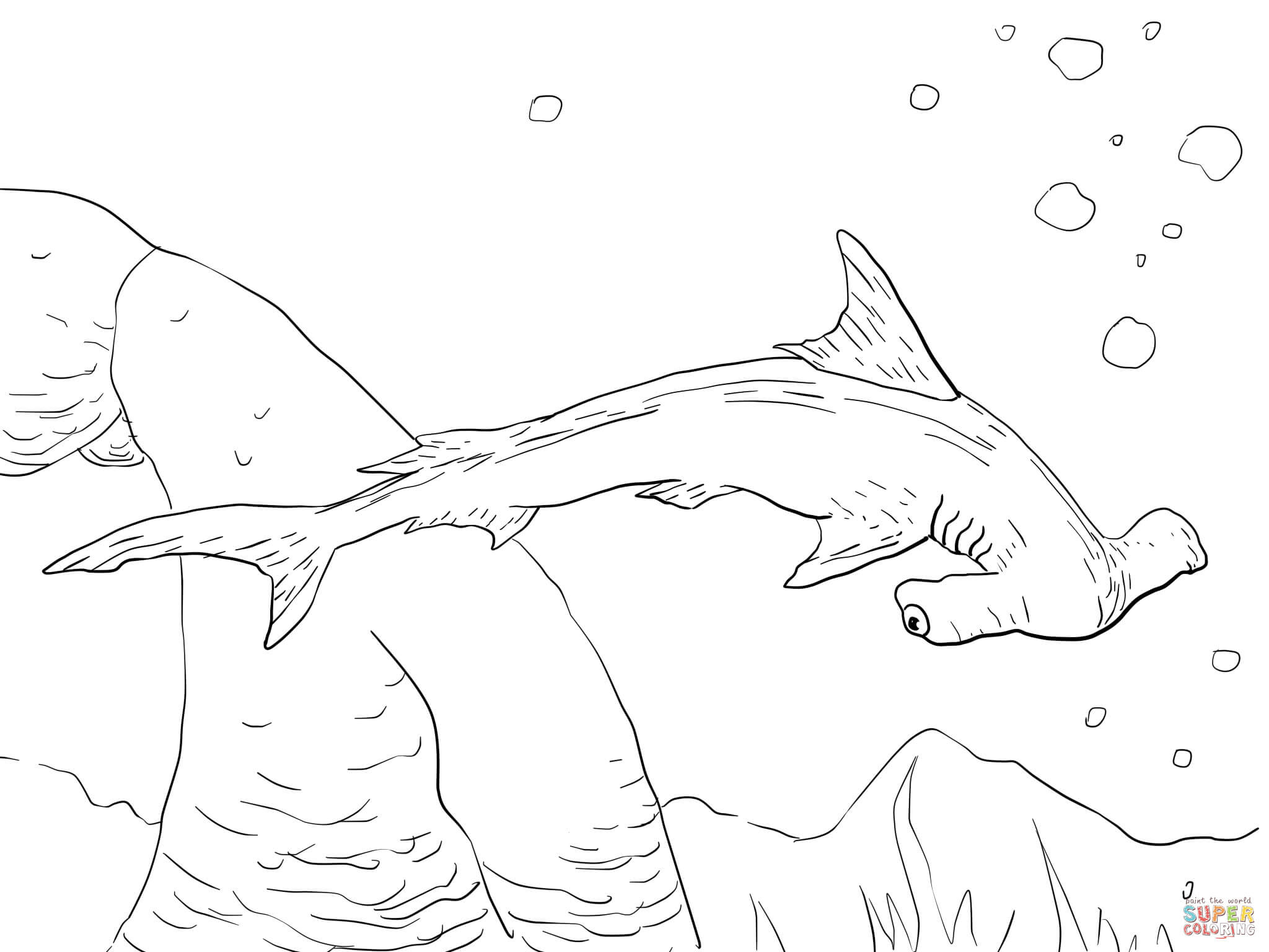 Scalloped Hammerhead Shark coloring page | Free Printable ...