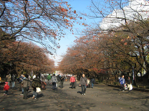Autumn leaves at Ueno Park 3