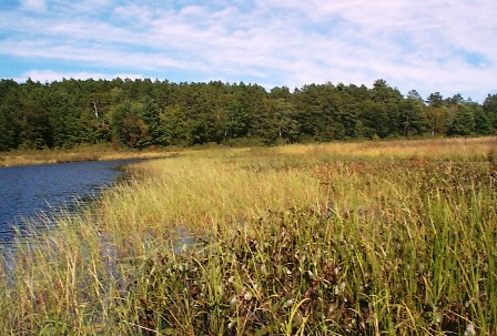 Protect tribal wild rice beds from Open-pit mining