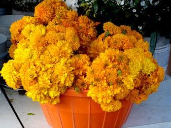 fleursmorts