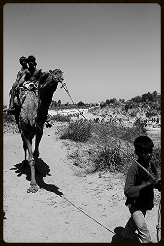 The Camels Of Makhanpur by firoze shakir photographerno1
