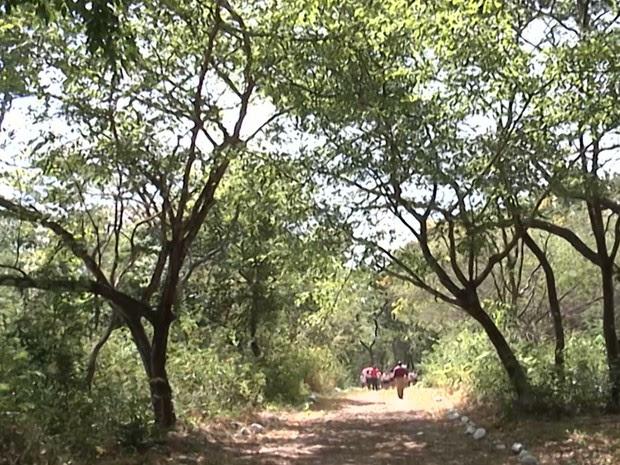 Bosque Josué Monteiro Rocha tem 400 metros de trilha preservados dentro de uma área militar em Caxias (Foto: Reprodução/TV Mirante)
