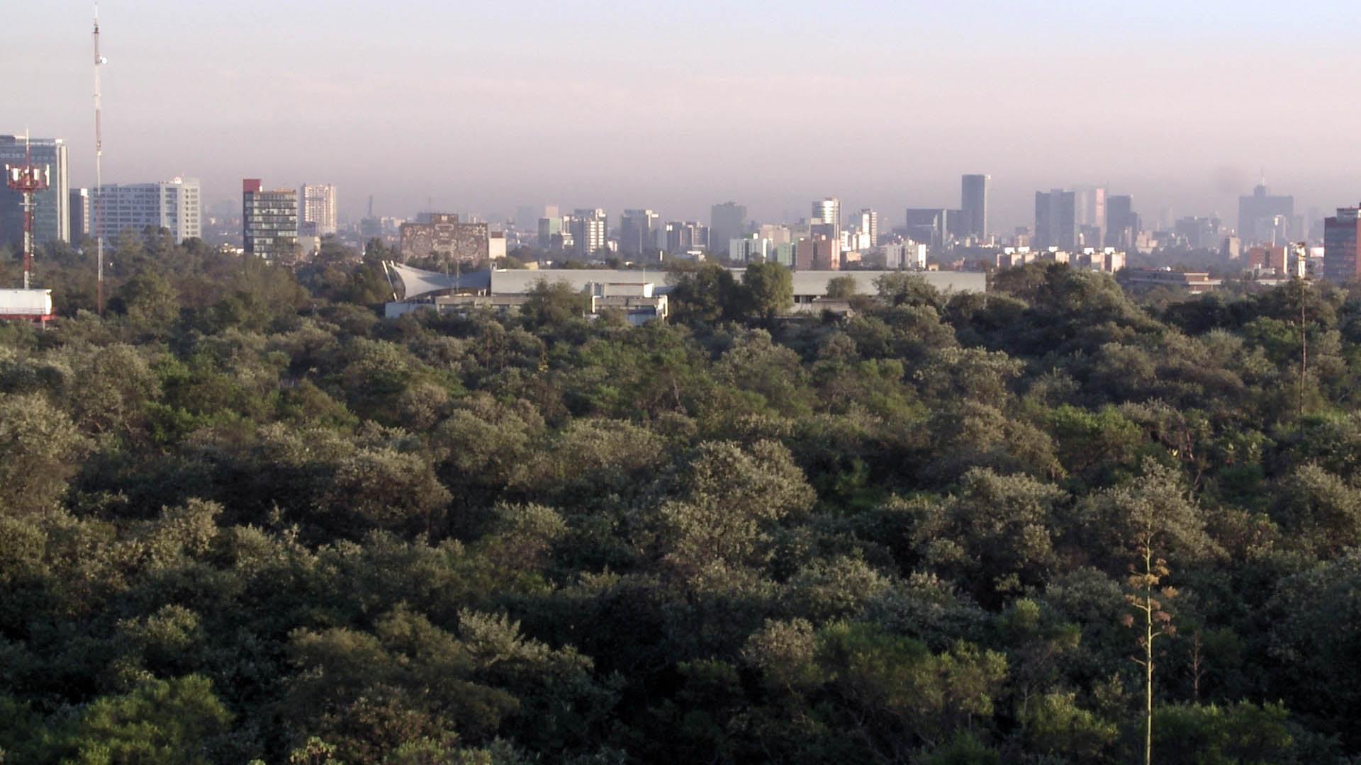 Necesario proteger Reserva del Pedregal de especies invasoras