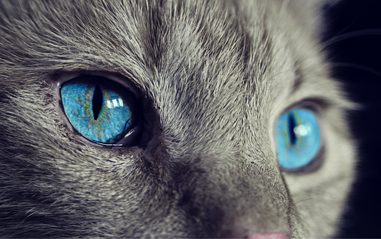 4 Things That Cats Really Hate