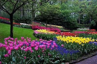 http://m1.paperblog.com/i/19/192138/disenar-el-jardin-como-elegir-plantas-flores-L-5.jpeg