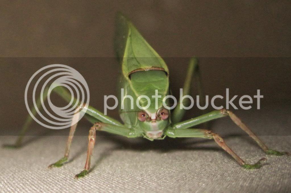 weird bug face