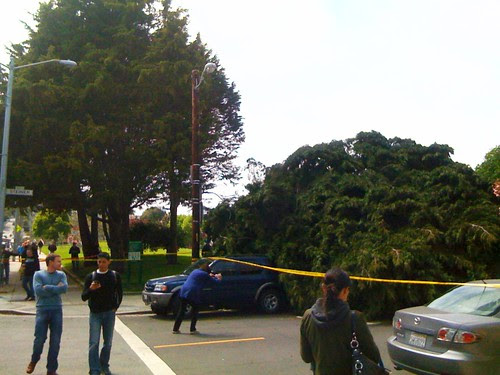 Duboce tree uprooted
