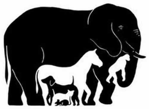 Quantos animais voce vê na imagem